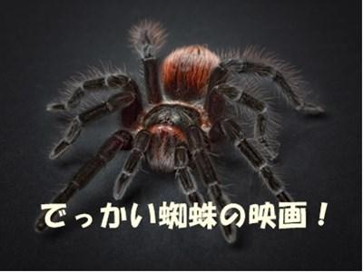 巨大蜘蛛映画のイメージ画像です